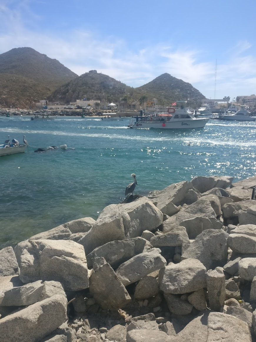A pelican suns himself on a rock in the Cabo San Lucas marina.